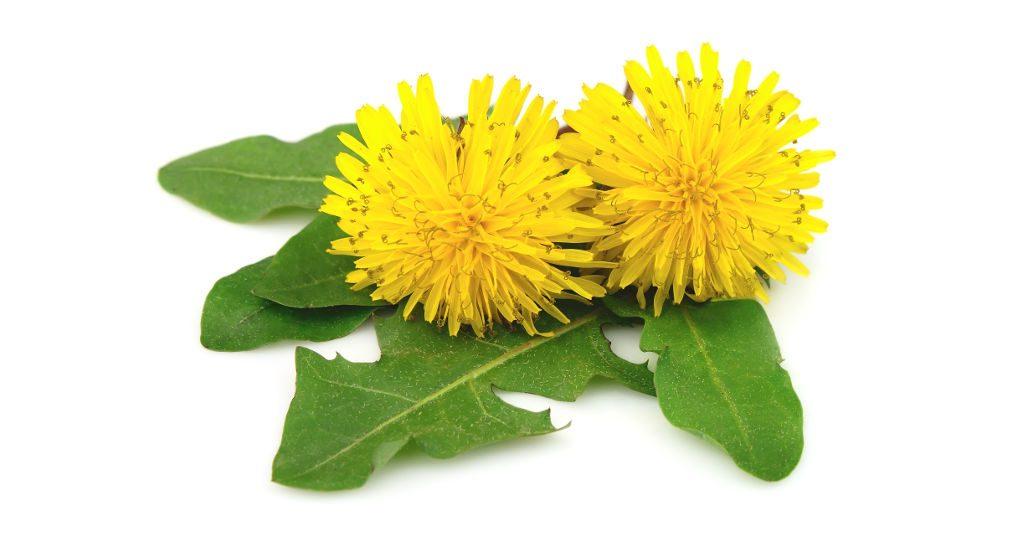 Quattro protocolli naturali per depurare l'organismo