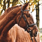 Galenica veterinaria per cavalli- Torino