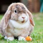 Galenica veterinaria per conigli - Torino